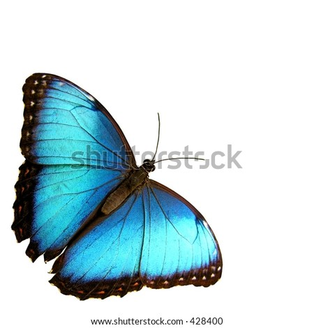 Isolated blue butterfly... - stock photo