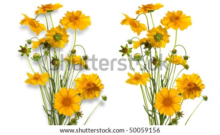 Isolated bouquet of of yellow daisy-gerbera with and without shadows