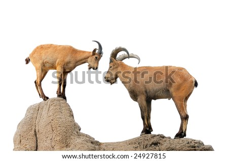 Isolated brown goat and ram on a hill - stock photo