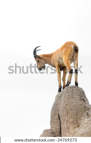 Isolated brown mountain goat on a hill - stock photo
