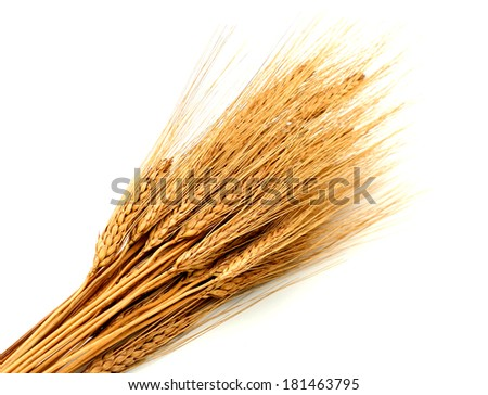 Isolated bunch of golden wheat ears - stock photo