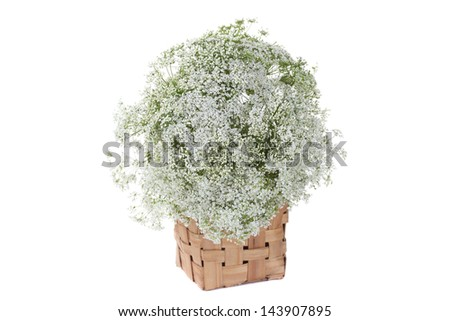 Isolated bunch of little white flowers - stock photo
