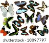 isolated butterflies - stock photo