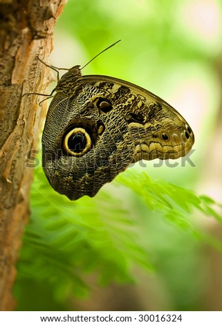 isolated butterfly on tree - stock photo