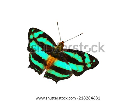 Isolated Butterfly on white background.