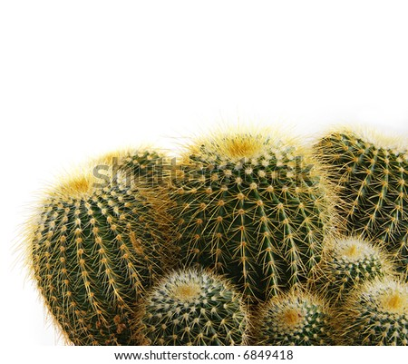 isolated cactus plant - stock photo