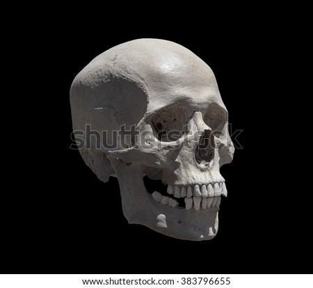 Isolated cast of the right side of a human skull looking to the right. - stock photo
