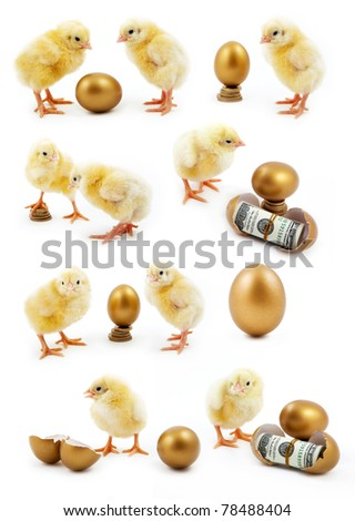 isolated chicken on a white background - stock photo