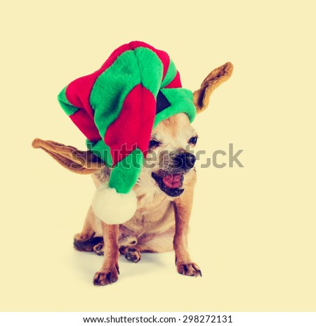 isolated chihuahua sitting with santa hat with retro instagram filter (shallow depth of field) - stock photo