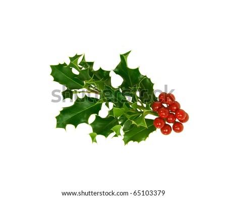 Isolated Christmas Holly - stock photo