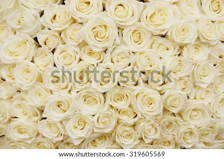 isolated close-up of a huge bouquet of white roses - stock photo