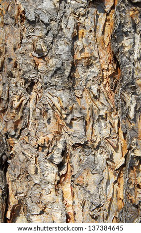 isolated closeup of brown Tree Bark Texture Background