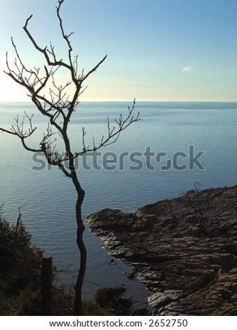 Isolated coastal tree at Silverdale