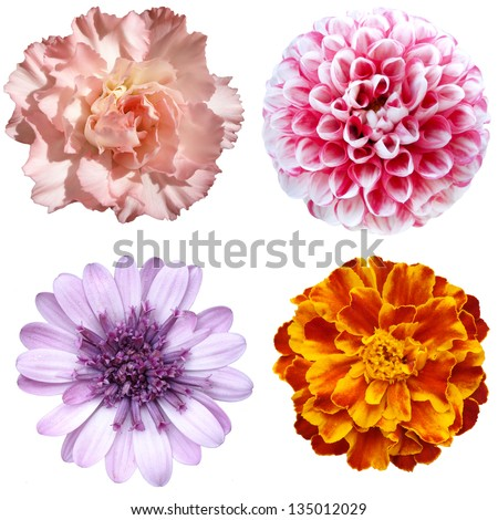 Isolated collage of colorful floral - stock photo