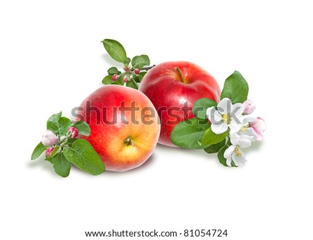 Isolated composition from apples and apple-tree blossoms - stock photo