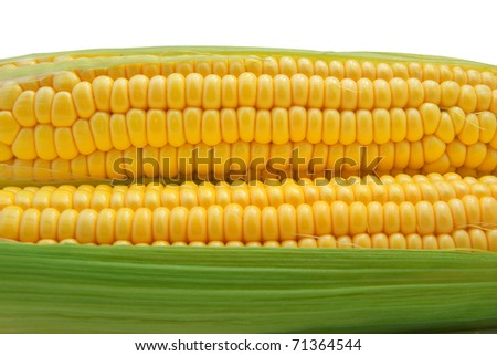 Isolated corn. Element of design. - stock photo