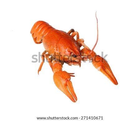 isolated crayfish - stock photo