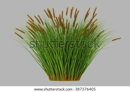 isolated 3d rendered grass   with alpha channel