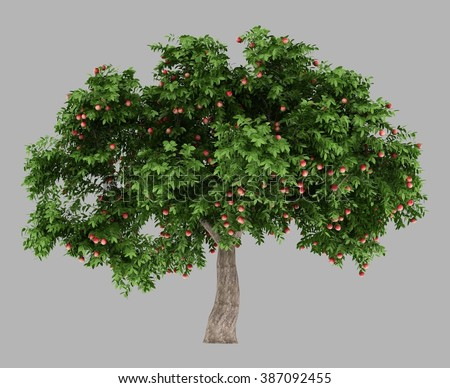 isolated 3d rendered Green Apple tree full of red apples with alpha channel