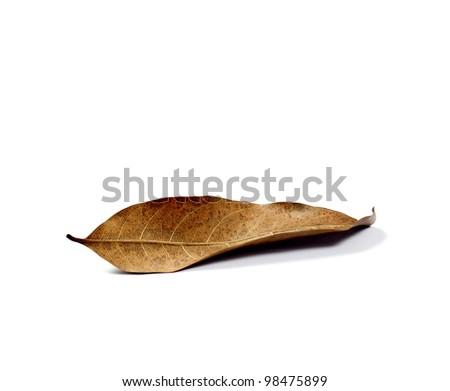 isolated dry leaf - stock photo