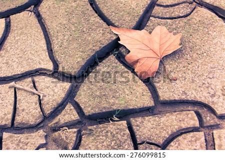 Isolated dry leaf on dry ground - toned image  - stock photo