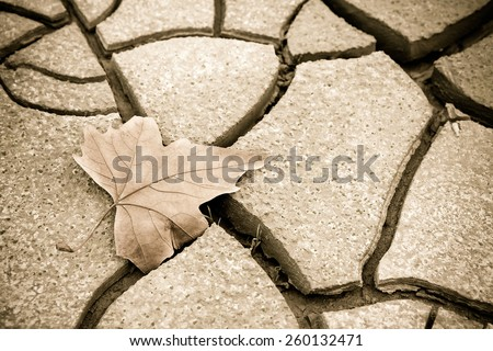 Isolated dry leaf on dry ground - toned image with copy space - stock photo
