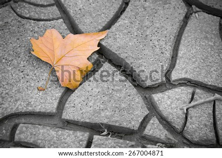 Isolated dry leaf on the ground - concept imagePicture useful to express the concepts of: life, death, melancholy,sadness, pessimism, hope, and so on ... - stock photo