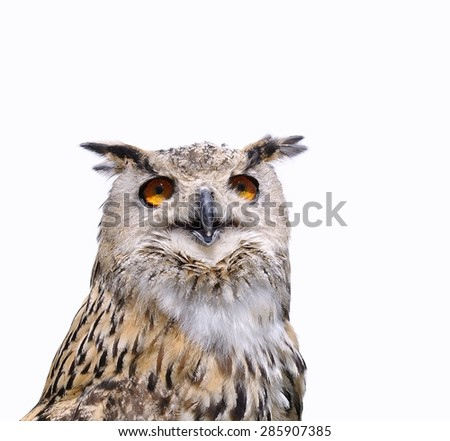 Isolated eagle owl on a white background. - stock photo