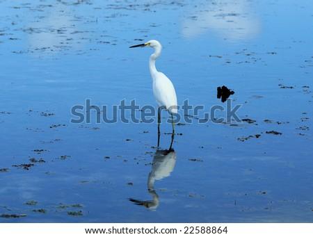 isolated egret - stock photo