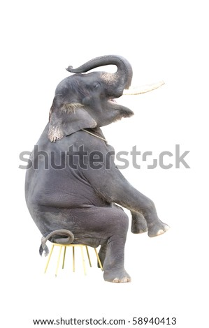 isolated elephant on a sitting position - stock photo
