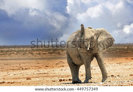 Isolated Elephant on the Etosha Plain with his trunk up against a cloudy background - stock photo