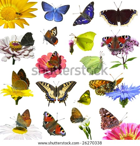 isolated european butterflies on spring flowers - stock photo