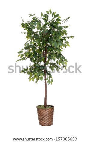 isolated fake tree - stock photo