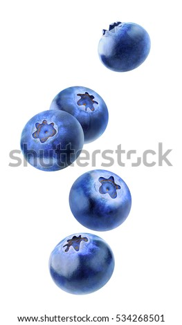 Isolated flying berries. Five falling blueberry fruits isolated on white background with clipping path