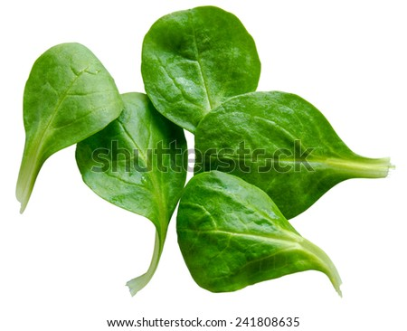 Isolated Fresh Washed Spinach Salad Leaves On White Background - stock photo