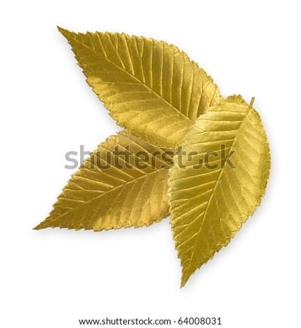 Isolated gold elm leaves - stock photo