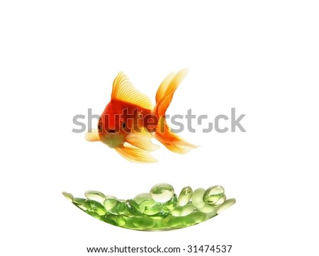 isolated gold fish over green glasses
