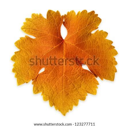 Isolated Grape Vine Leaf - stock photo