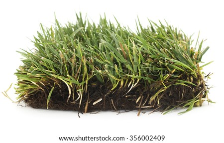 Isolated grass patch on a white background. - stock photo