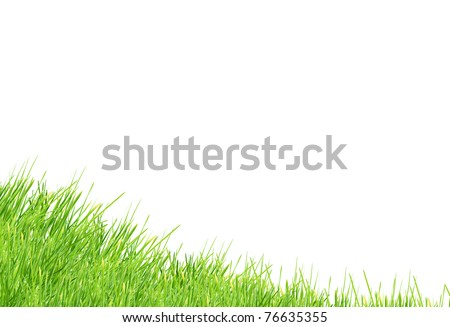 Isolated green grass on a white background - stock photo