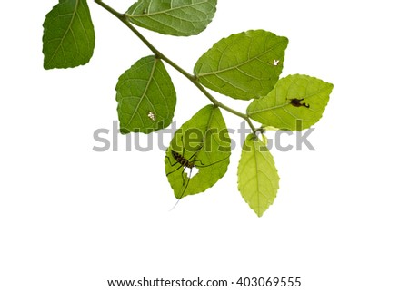 isolated green tree branch