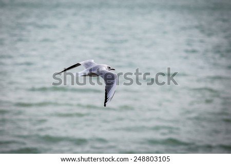 Isolated gull fly over the sea