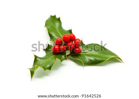 Isolated Holly Branch and Red Berries - stock photo
