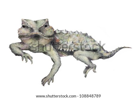 Isolated Horned Toad Illustration