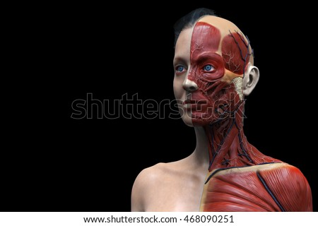 isolated human anatomy model of a female - muscle anatomy of the face neck and chest , medical image reference of human anatomy , realistic  3D rendering
