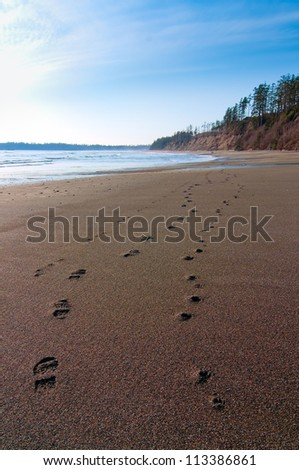 Isolated human and dog footsteps side by side in sand along the shore.
