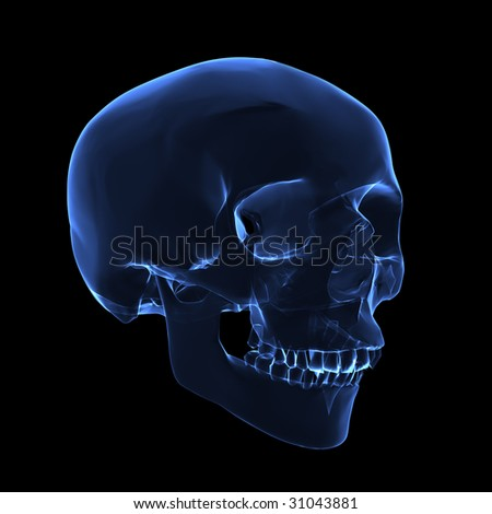 Isolated  human x ray skull