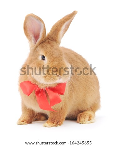 Isolated image of a brown bunny rabbit with red bow.