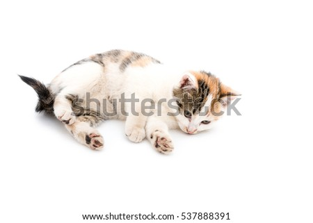 Isolated image of a cute baby house cat
