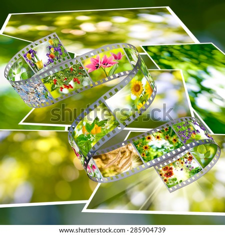 Isolated image of nature photo on the photo strip on a green background closeup